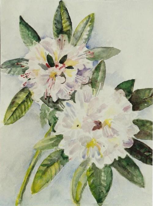 arti11192007105108Rhododendron.jpg